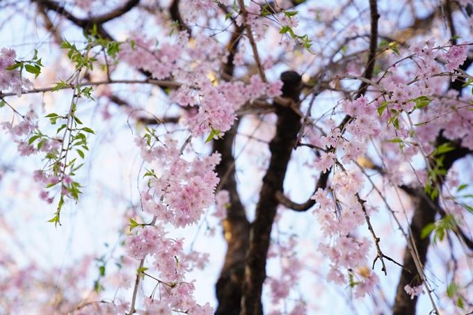 桜_2021_53 京都地方裁判所 No11