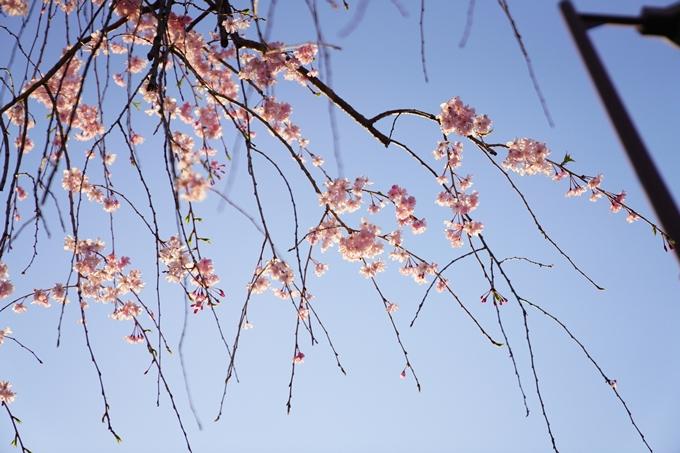 桜_2021_53 京都地方裁判所 No14