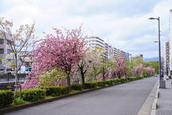 桜_2021_54 堀川_02 No6