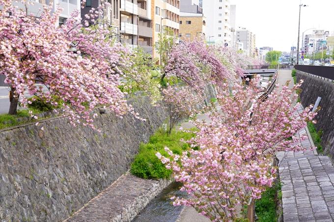 桜_2021_54 堀川_02 No8