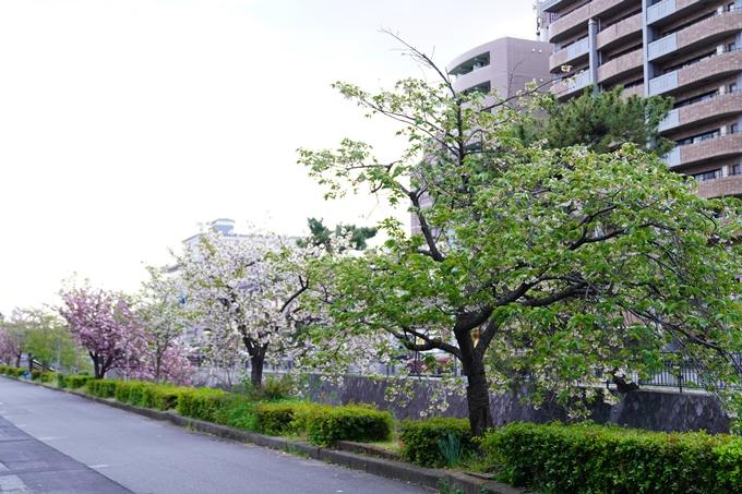 桜_2021_54 堀川_02 No2