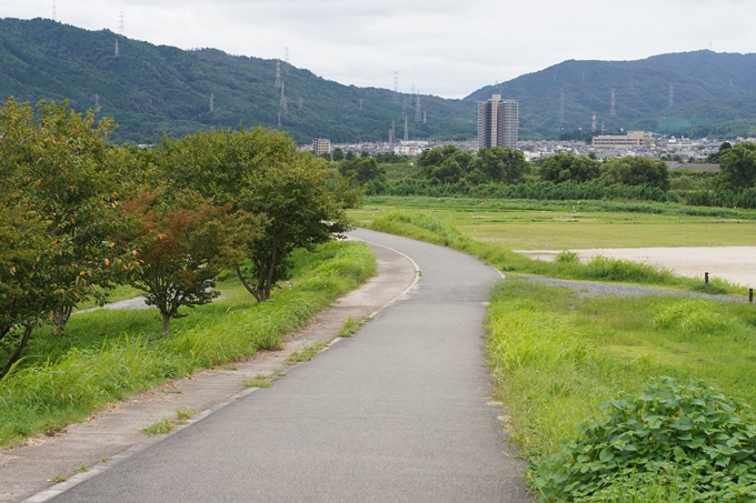 保津小橋 No42