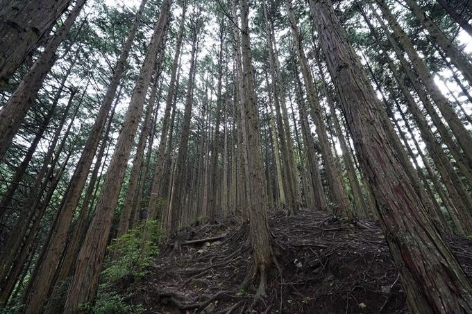京都一周トレイル_北山編_2021 No18