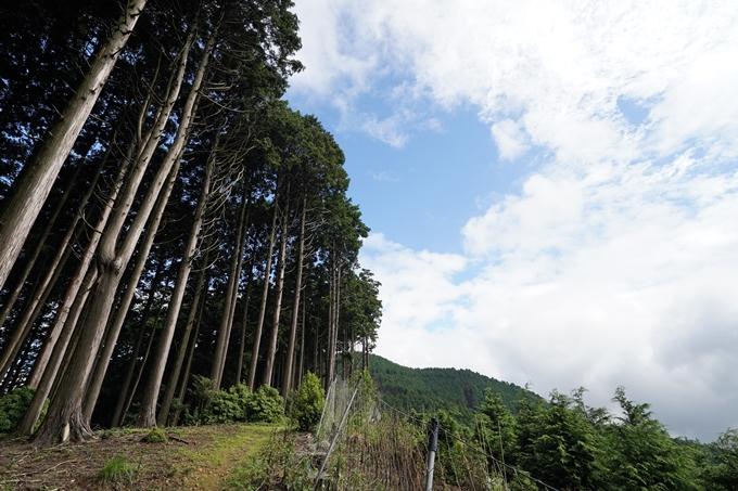 京都一周トレイル_北山編_2021 No40