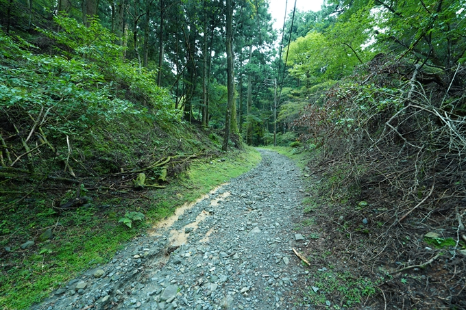 京都一周トレイル_北山編_2021 No115
