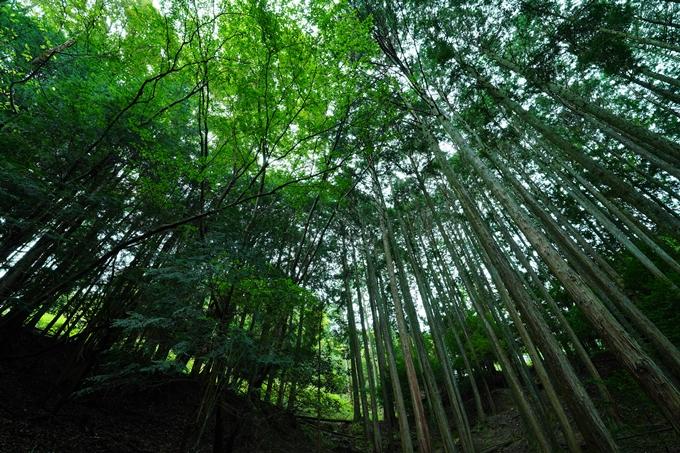 京都一周トレイル_東山編_2021 No55