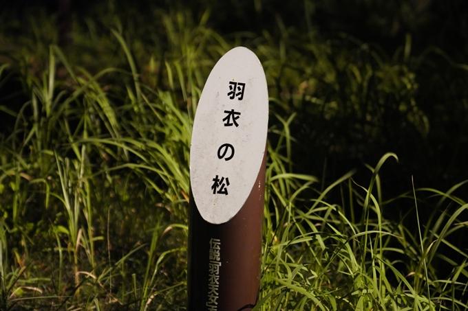 光のアトリエ_2021_天橋立砂浜ライトアップ No7